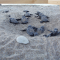 Palermo, nido di tartarughe a Mondello