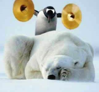 Perchè gli orsi vivono solo al Polo Nord e i pinguini solo al Polo Sud?