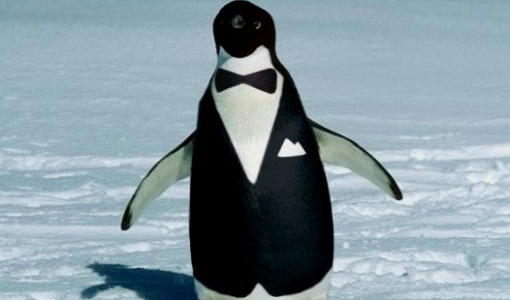 Perchè i pinguini oscillano mentre camminano?