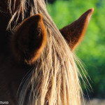 Cavalli Insugherata 1