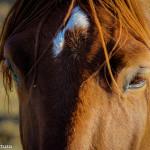 Cavalli Insugherata 2