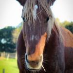 Cavalli Insugherata 3