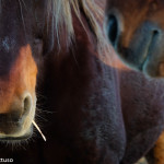 Cavalli Insugherata 5