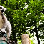 Zoo di Salisburgo